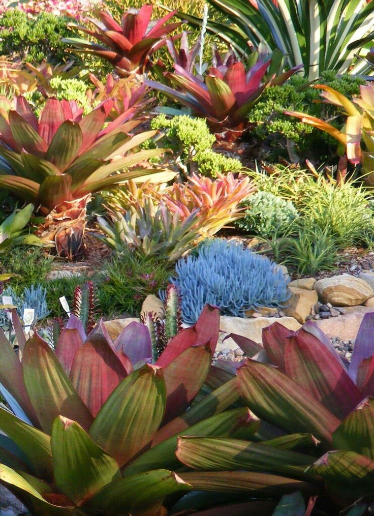 Pin By Serragardens On Tropical Flair Succulents