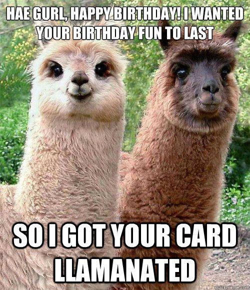 10c1292677ed726b607d2b946ba6c638 llama face baby llama 82 best birthday memes images on pinterest birthday wishes,Birthday Meme Animal