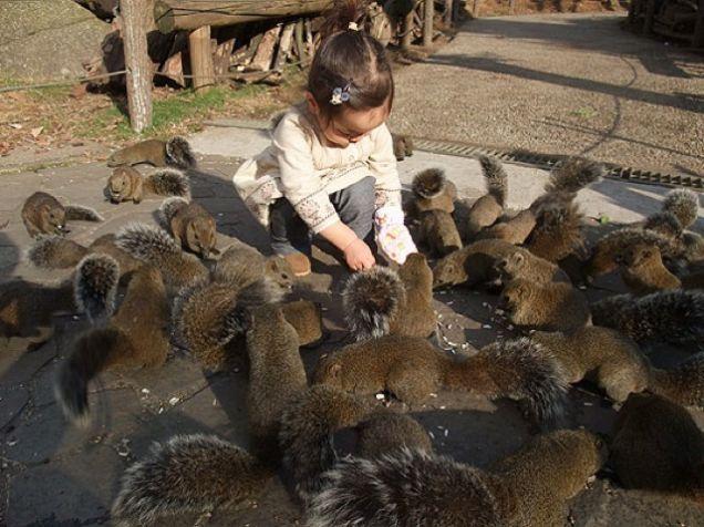 Inside Japan's Squirrel Gardens. Yes, Squirrel Gardens! Perhaps the most famous squirrel garden is Machida Risu-en in Tokyo.