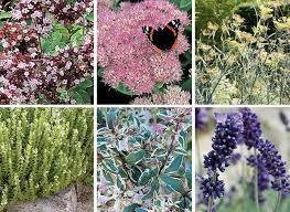 Plantes mellifères pour attirer les butineurs au jardin