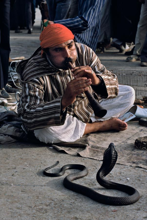 Charming the Snake - Marrakesh, Morocco