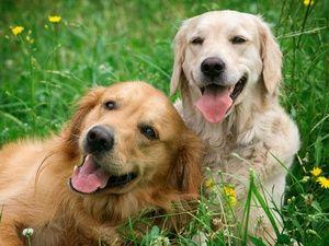 Trusted Housesitters - zamieszkaj w domu w zamian za opiekę nad zwierzakami