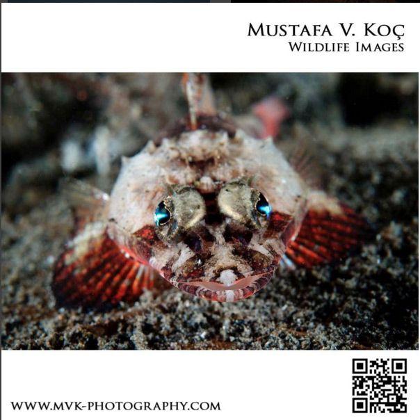 Mustafa Koç'un çektiği doğadan harikalar İşte Mustafa Koç'un kendi çektiği doğadan harikalar... (Mustafa Koç'un çektiği doğadan harikalar)