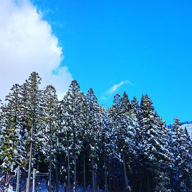 【sandai006】さんのInstagramをピンしています。 《スキー場✌ スキーできてよかったね。 #空#sky☁ #青空#bluesky #雲#cloud #森#forest #木#tree #雪#snow #スキー#skiing #スキー場#ski_resort  #hyogo#japan》