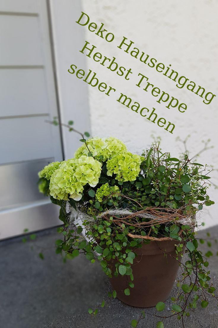21 Pflanzen Ideen in 21   pflanzen, bepflanzung, pflanzideen