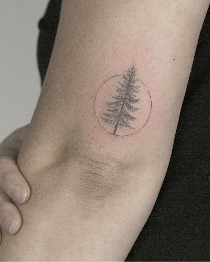 Dainty pine tree tattoo