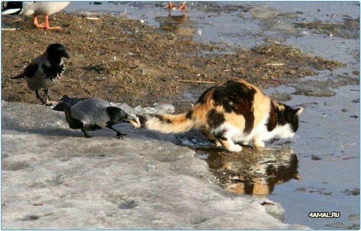 Отойди от моей воды котяра
