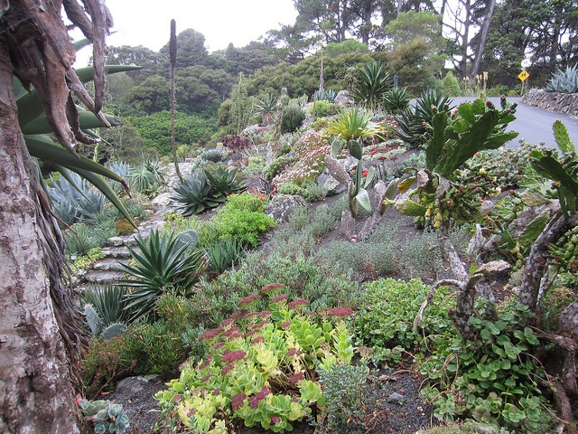Wellington Botanic Garden, Wellington, New Zealand. The Succulent Garden by Big..Al, via Flickr