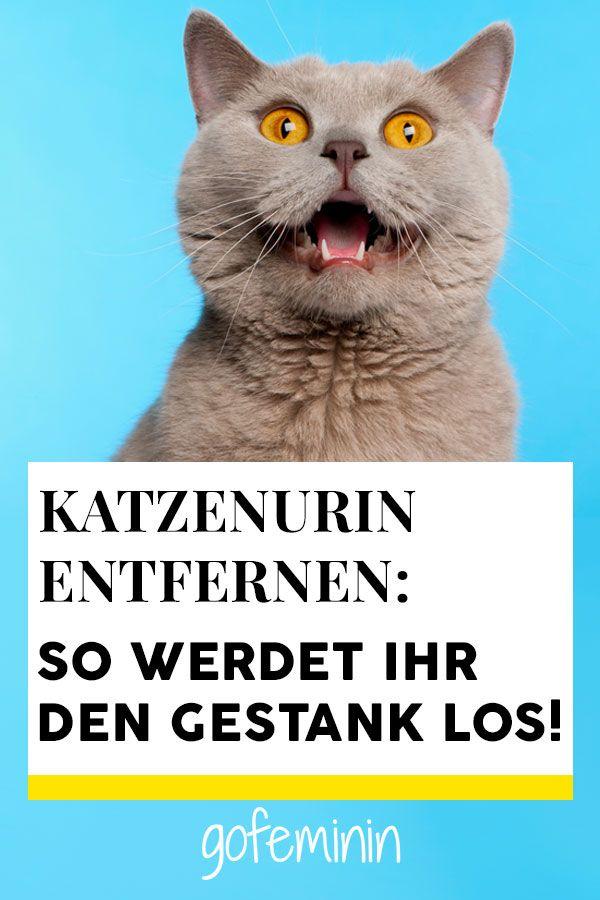 Katzenurin Entfernen Die Besten Hausmittel Gegen Geruch Katzenurin Katzenurin Entfernen Katzen