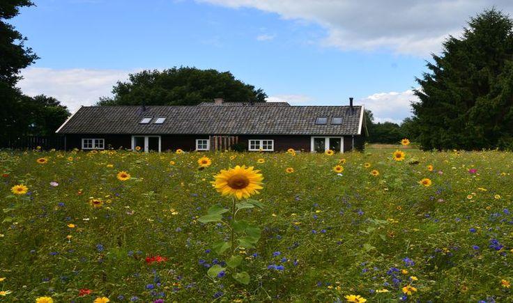 Natuurhuisje 30221  - vakantiehuis in Varssel - Hengelo Gld