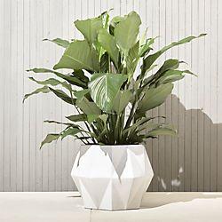 isla white planter