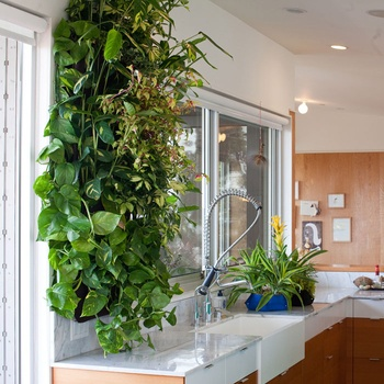 Living wall!  This is something I really am going to get.
