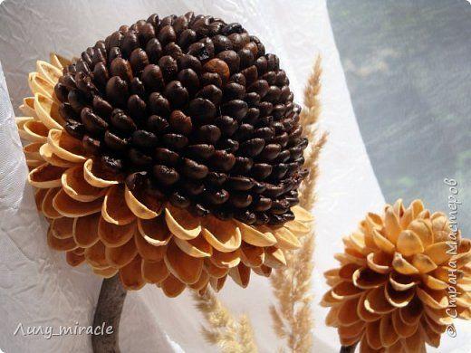 Бонсай топиарий ёлка Моделирование конструирование Вдохновение Дерево Кофе Скорлупа ореха фото 2: