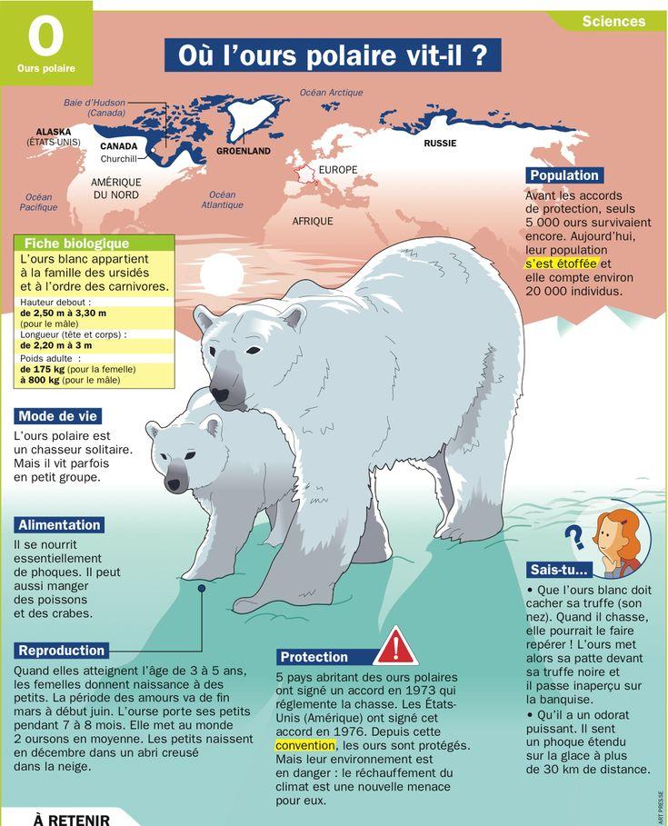 Fiche exposés : Où l'ours polaire vit-il ?