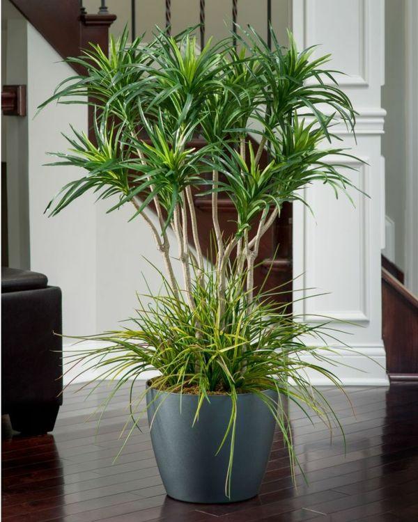 palmlilie interior zu hause