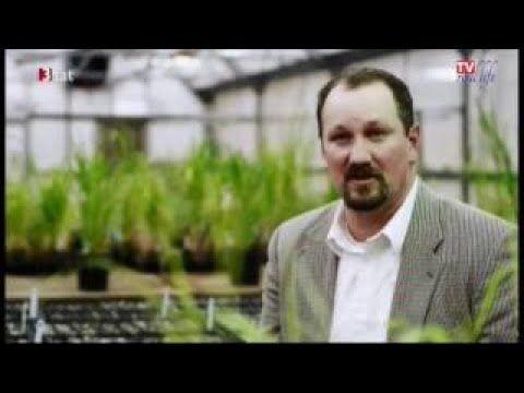 Monsanto-Tribunal erkennt Ökozid durch Glyphosat | Roundup, der Prozess ...