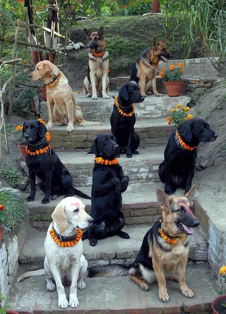 K Dog Training Lincolnshire
