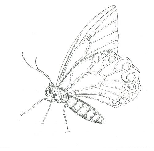 18 best Free Advanced Bug Coloring Pages images on Pinterest