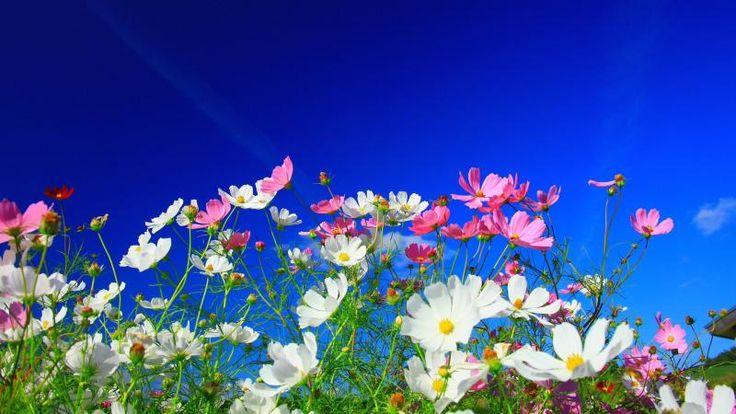 Beautiful Flowers Scenery