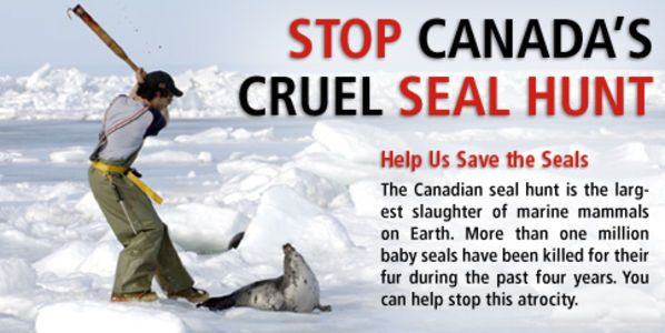 End the Canadian Seal Hunt Now!