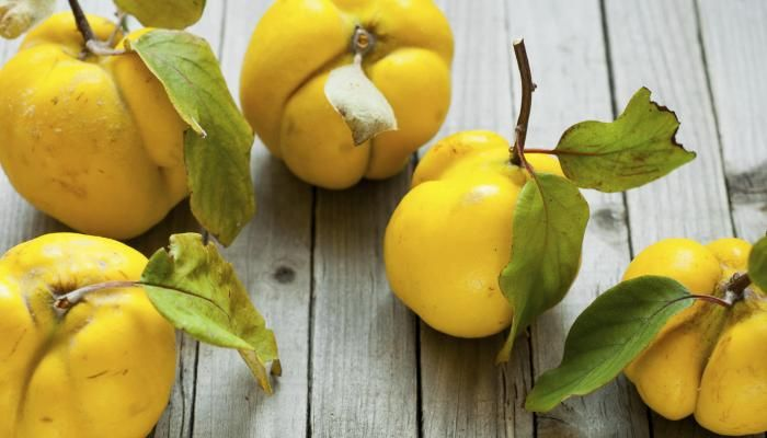 The quince: The fruit that started the Trojan War?