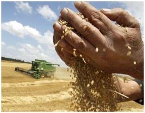 La agricultura ecológica favorece la biodiversidad, respeta el medio ambiente y la salud. La agricultura industrial es necesaria para abastecer la necesidad mundial creciente de alimentos