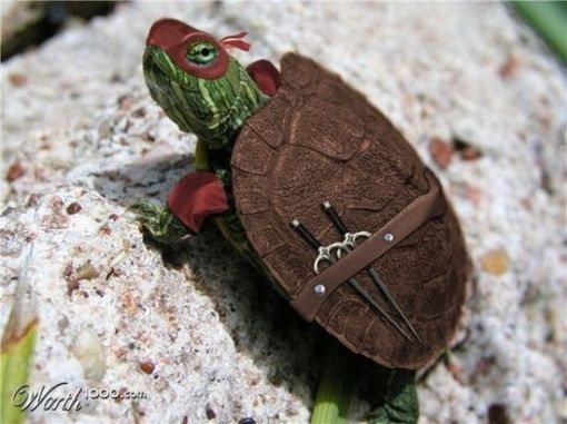 Teenage mutant ninja turtle!