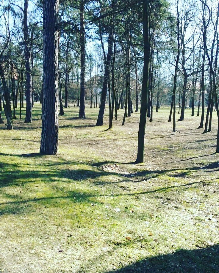 Piękne słońce w lesie :)