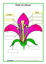 Worksheets Parts Of A Flower Worksheet 4th Grade parts of a plant plants and flower on pinterest