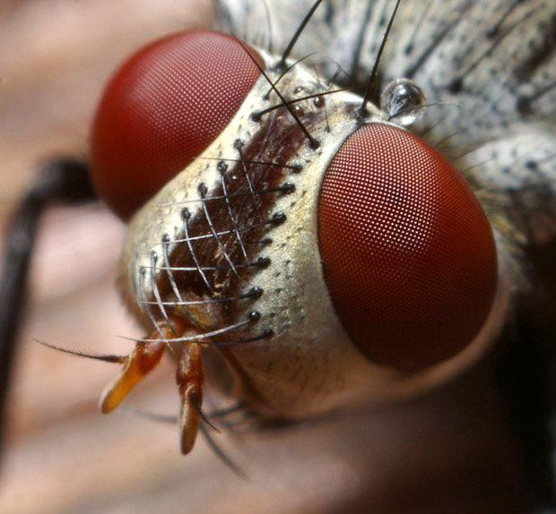 Macro photographs of bugs' eyes: Thomas Shahan goes eyeball-to-eyeball with…