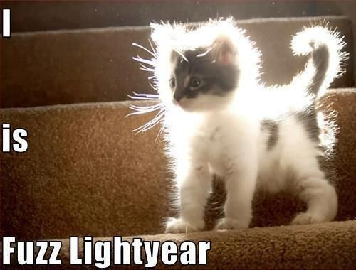 fuzz lightyear: Angel, Trav'Lin Lights, Catlady, Fuzzlightyear, Fuzz Lightyear, Fuzzy Wuzzy, Cute Kittens, Cat Lady, Animal