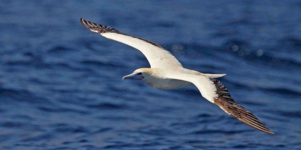 El cambio climático altera los hábitos migratorios de numerosas aves raras