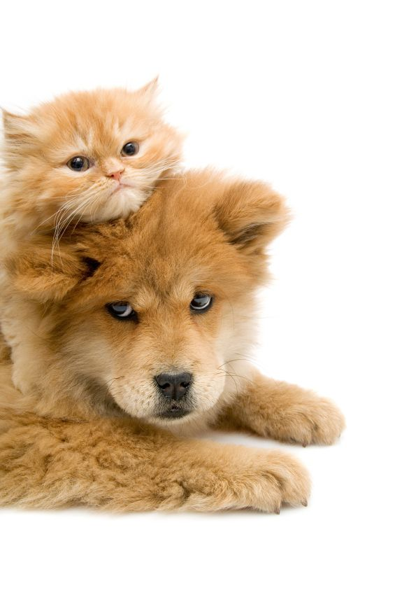 Cute Puppies and Kittens Pictures.