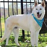 ●7•18•17 SL●SWEET, FRIENDLY SHEPHERD BOY LONGS FOR LOVING HOME!  German Shepherd Dog Dog for adoption in Princeton, Kentucky - Raylan. Already neutered, purebred, in need of an experienced adopter, and up to date with shots.