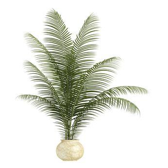 Kasvit ovat luonnonmukainen tapa puhdistaa huoneilmaa. Raitista ilmaa saa ikkunasta, mutta sekään ei välttämättä ole kovin puhdasta ainakaan kaupungeissa. Sanotaan, että sademetsät ovat maapallon keuhkot. Samaa kasvien puhdistavaa ominaisuutta voi soveltaa sisätiloihinkin. … Lue lisää
