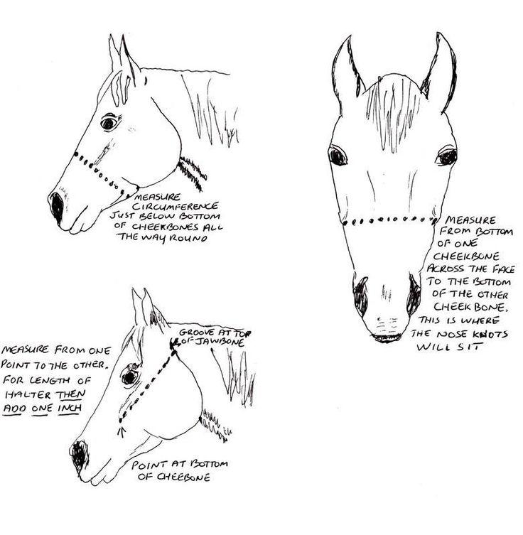 17 Best Images About Model Horse Stuff