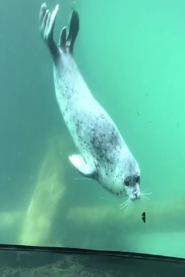 Watch Seal And Butterfly Play Inter Species Game At Aquarium Aquarium Sea Creatures Species