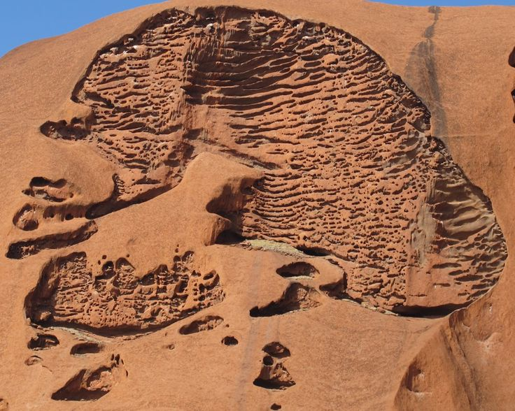 Uluru. The rock is mainly arkose, I gather, and on the northern face, there is a lot of honeycomb weathering. This section looks like a sagittal MRI of a human cranium.