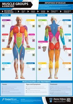 Muscle Groups & Exercise Suggestions Infographic