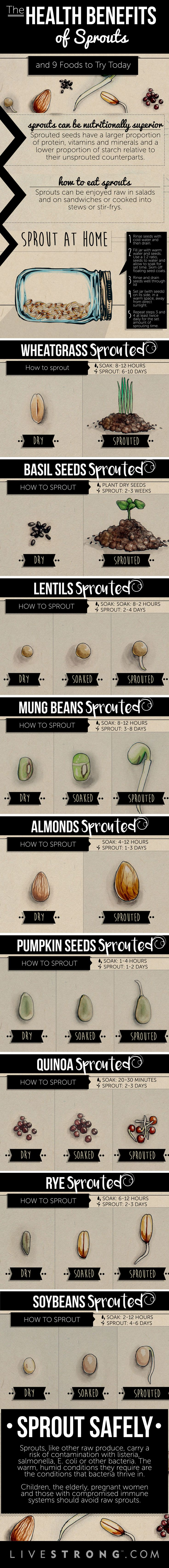 The At-Home DIY Guide to Sprouting!