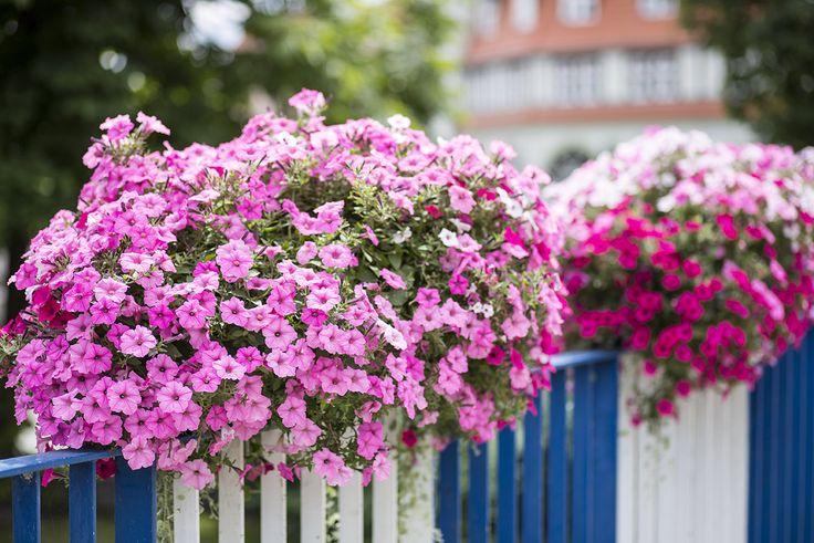 Kwiatowa dekoracja w skrzyniach, czyli most do natury  how to decorate  bridges with flowers? Atech flower boxes www.atech-pl.eu