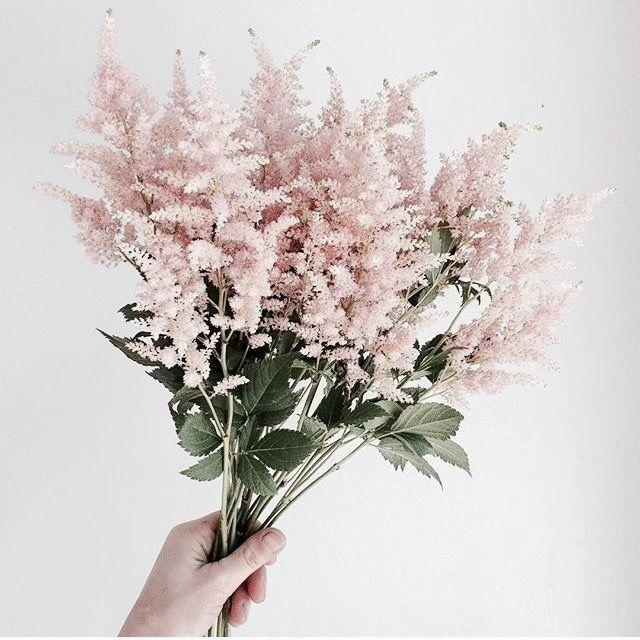 Little Delicate Pink Flowers Flowers Plants Flowers Bouquet