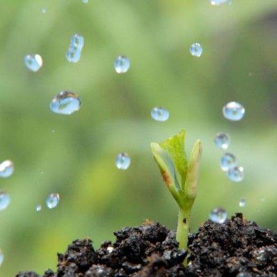 3 elementy, od których zależy piękno Twojego ogrodu.