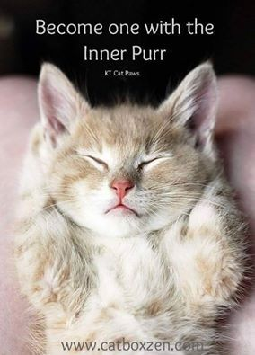 Cat Stock Quote Amazing 143 Best Quoteskt Cat Paws Images On Pinterest  Cat Paws Kitty . Design Decoration