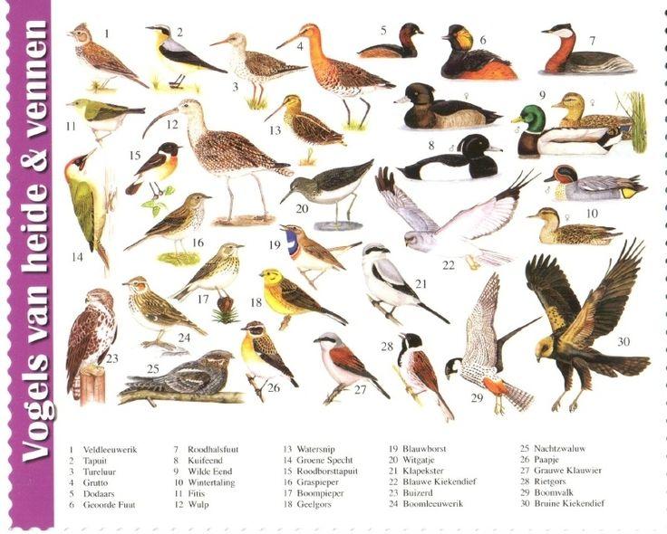 van der Meulen - birds of the heath and plains