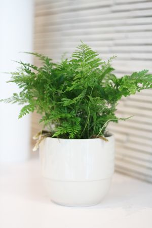 A Shopper's Guide to Buying Indoor Ferns | Costa Farms