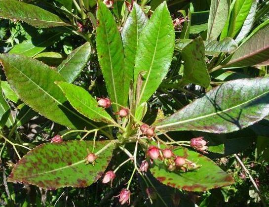 L'huile essentielle des tout petits! Le bois de rose est l'une des rares huiles essentielles polyvalente chez le bébé. En cas de doute, le bois de rose! Chez l'adulte aussi, elle sera a…