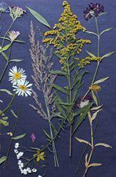 Be a #Botanist Make #Herbarium Sheets