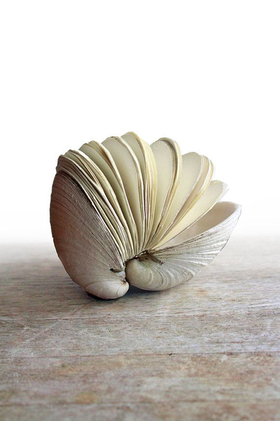 """Offering No. 51 - Handstitched Clamshell Book Sculpture"" by Erica Ekrem (odelae) on Etsy. This is one of the most amazing works of art I've ever seen - so beautiful! What an amazing concept. You should look at the back of it, too. A precise Coptic stitch holds it into the shells..."