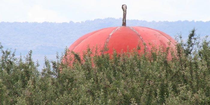 The Big Apple, Batlow
